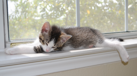 sleeping-kitten